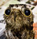 awesomepotoo